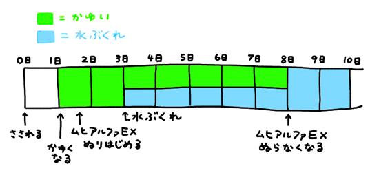 kayumi2-2