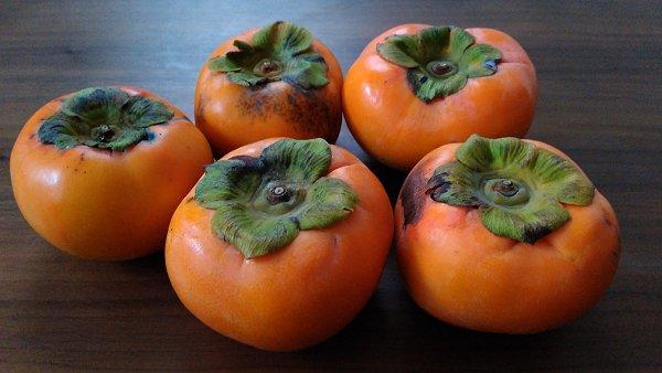 朝倉の柿の写真